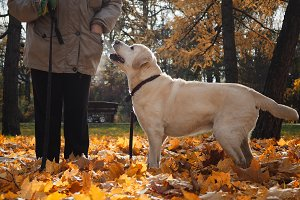 The dog faithfully looks at the man. Autumn Park, cold. The steam from the jaws of the dog