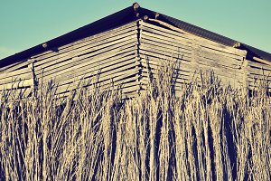 old tobacco farm, vintage