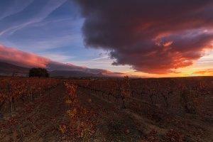 Colorful sunrise in a vineyard at Laguardia, Alava