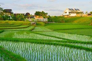 Villas in Bali rice fields