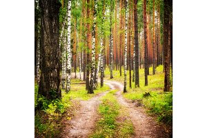 Pathway in summer forest