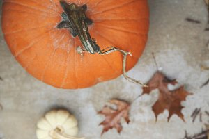 Pumpkins and Leaves 2