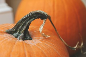 Pumpkin Close Up