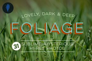 Photo Bundle: Mysterious Foliage