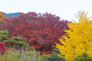 Spring change color