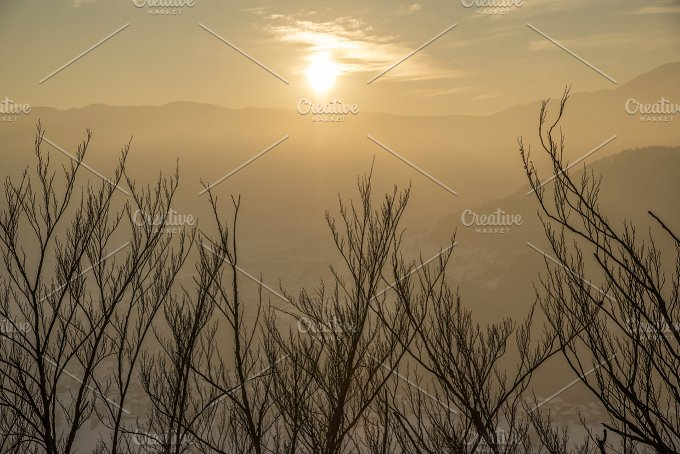 Golden Sunset over the branches - Nature