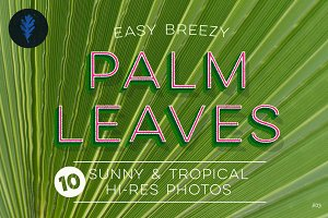 Photo Suite:  Palm Leaves