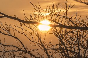Burning Golden Sun in the Branches.