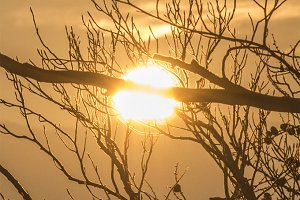 Burning Golden Sunset in Branches