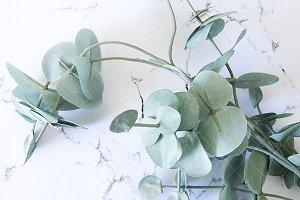 Gum leaves marble background fem pic