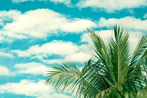 Coconut palm tree against blue cloud sky, beautiful tropical background