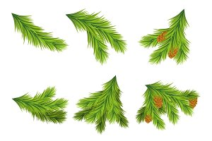 Set of Christmas tree branches for decorations.