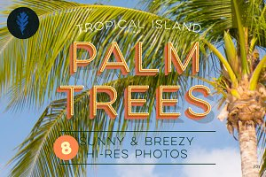 Photo Suite:  Palm Trees