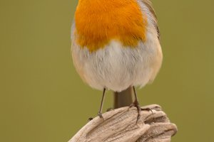 Beautiful small orange bird