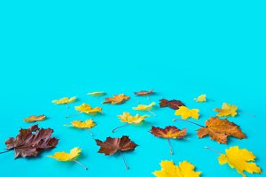 Autumn Fall Leaves Flat Design