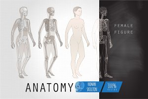 Anatomy female figure skeleton