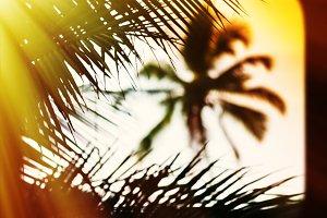 Sunset palm tree blurred framed postcard background