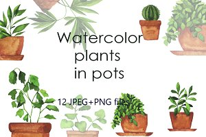 Watercolor pot plants