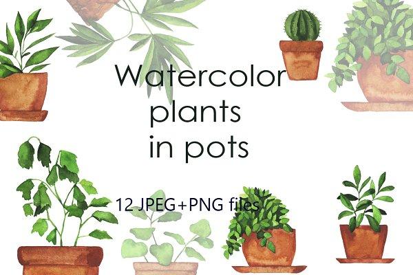 Watercolor pot plants