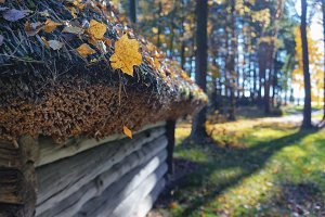 Thatched roof in autumn in the forest