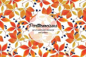 Set of watercolor parthenocissus