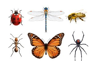Insects realistic icons set