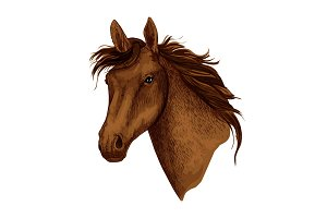 Horse animal muzzle vector sport racehorse icon