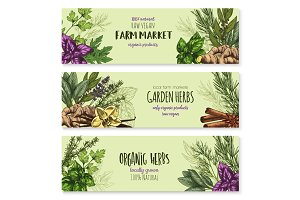 Vector sketch banners of spice and herb seasonings