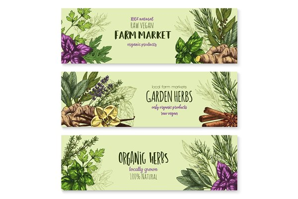 Vector Sketch Banners Of Spice And Herb Seasonings Pre Designed Illustrator Graphics Creative Market