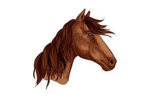 Horse animal brown stallion racehorse vector icon