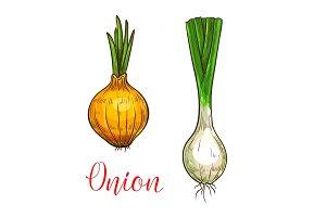 Onion leek vector sketch vegetable icon