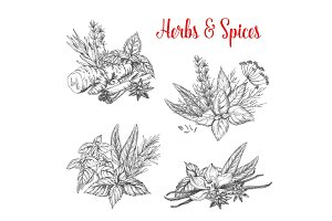 Vector sketch spices and herbs for farm market