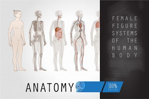 Systems Human Body Anatomy Female