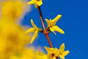 Yellow blossom against a blue sky
