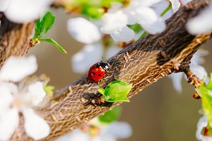 Ladybug enjoying Spring