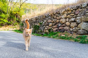 Tabby cat walking on the street
