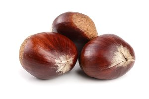 fresh edible chestnut isolated on white background