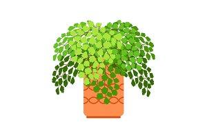 Adiantum house plant