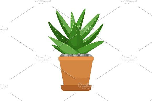 Aloe Vera In Flower Pot