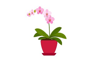 Orchid pink house plant