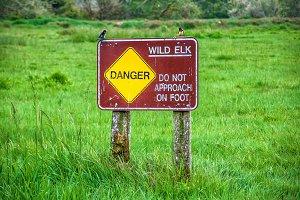 Wild Elk Sign in the Redwood Park