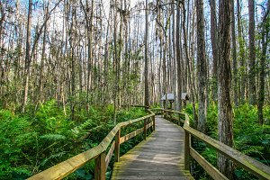 Wooden Deck in the Everglades, Florida