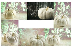 White Pumpkins & Bokeh Multipack