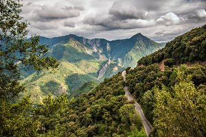 Road in Sequoia National Park