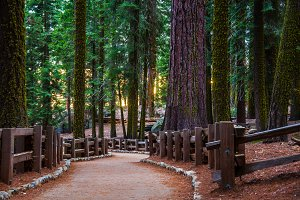 Redwood Trail in a Sequoia Park