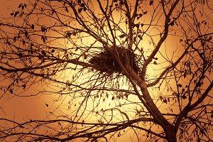 Bird's Nest Dry Tree & Evening Sun