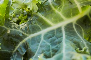 Green leaf kale closeup