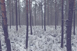 Forest in winter 1