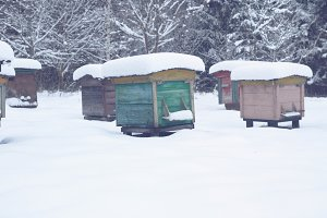 Beehives in winter 3