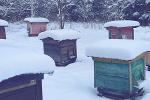 Beehives in winter 4